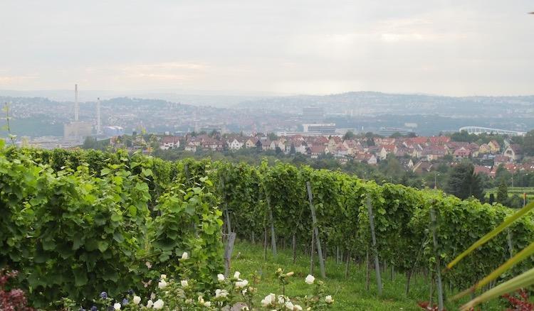Blick über Weinberge auf die Stadt Stuttgart